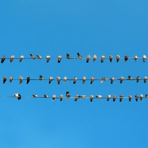 identical birds