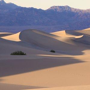 online desert